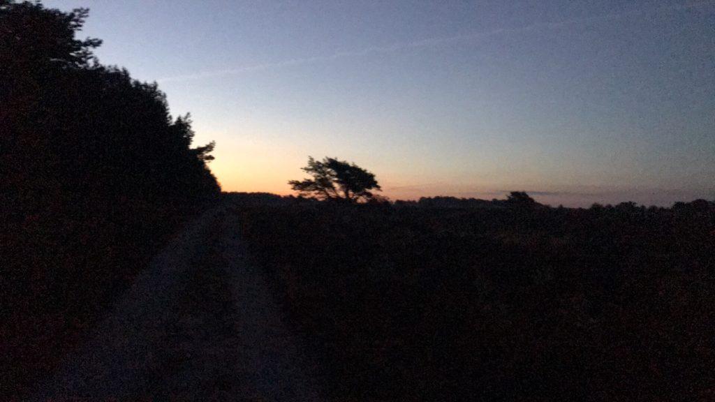 Daglicht